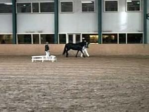 Indoor looptraining van Fries paard