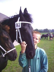 StarKing in actie bij een Friese paarden keuring